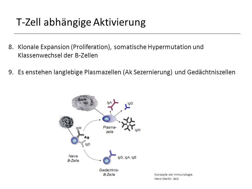 Humorales Gedächtnis Gedächtnis B-Zellen: Langlebig, teilen sich nicht BCR vorhanden, sezernieren keine Ak somatische Hypermutation und Klassenwechsel schon gemacht, dadurch höher affine Ak als naïve B-Zellen Ag wird besser gebunden und präsentiert mehr MHCII und costimulatorische Moleküle als naïve B-Zellen schnellere Wechselwirkung mit T-Zellen Nach der Aktivierung bilden sie direkt IgG, IgE und IgA oder nochmal somatische Hypermutation