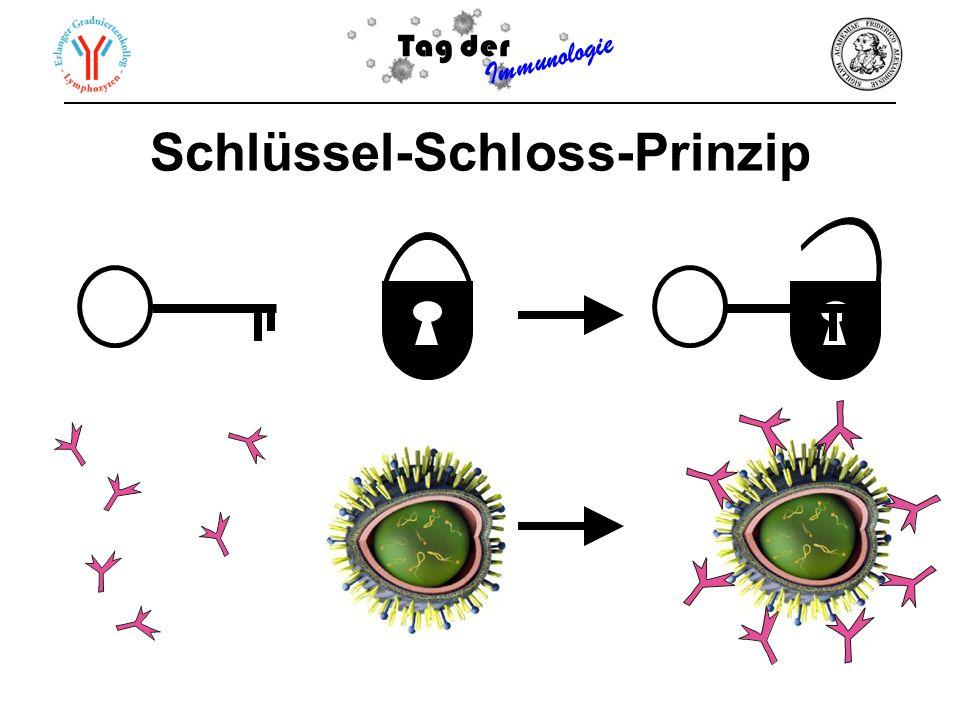 Tag der Immunologie Schlüssel-Schloss-Prinzip