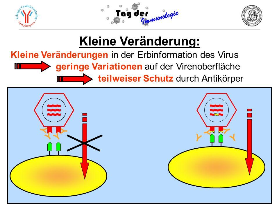 Y Y Y Y Kleine Veränderung: Kleine Veränderungen in der Erbinformation des Virus Y Y Y Y Tag der Immunologie geringe Variationen auf der Virenoberfläc