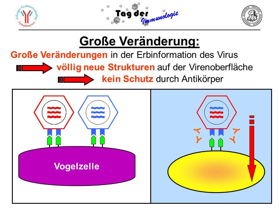 Vogelzelle Tag der Immunologie Große Veränderung: Große Veränderungen in der Erbinformation des Virus Y Y Y Y kein Schutz durch Antikörper völlig neue