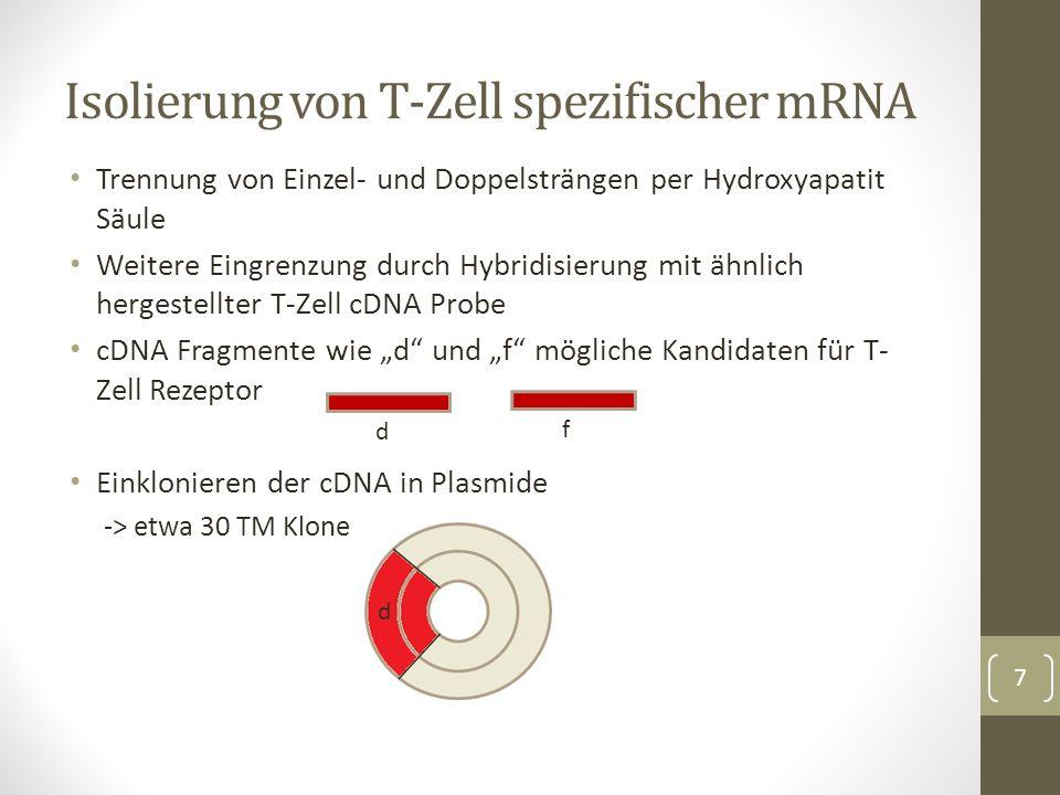 Hybridisierung an genomische DNA aus Leber- und T-Zellen Radioaktiv markierte Inserts aus den Klonen als Sonde Verdau mit Pvu II -> Southern Blot Überprüfen von somatischer Rekombination 8