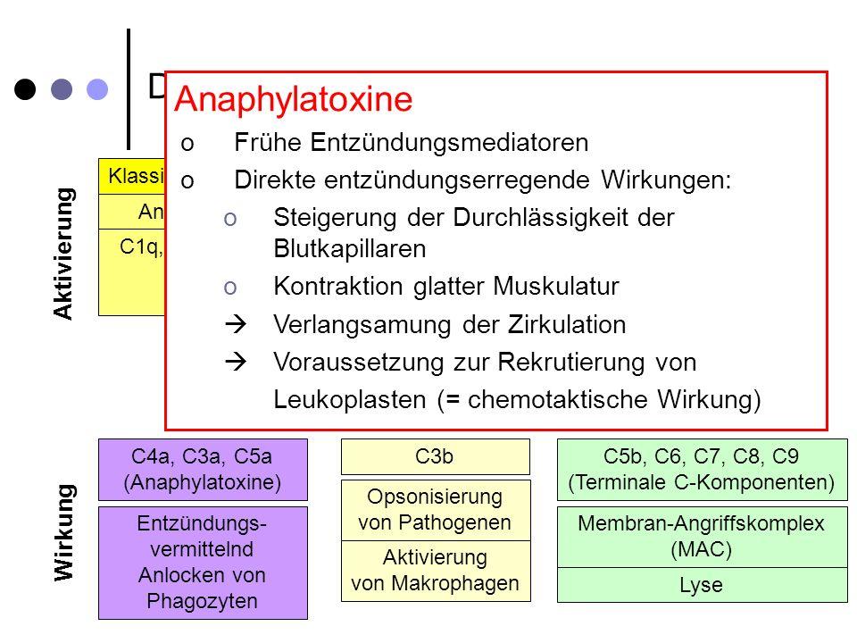 Das Komplementsystem – Im Detail Klassischer Weg Alternativer Weg Spontane Hydrolyse C4a, C3a, C5a (Anaphylatoxine) C3b Opsonisierung von Pathogenen A