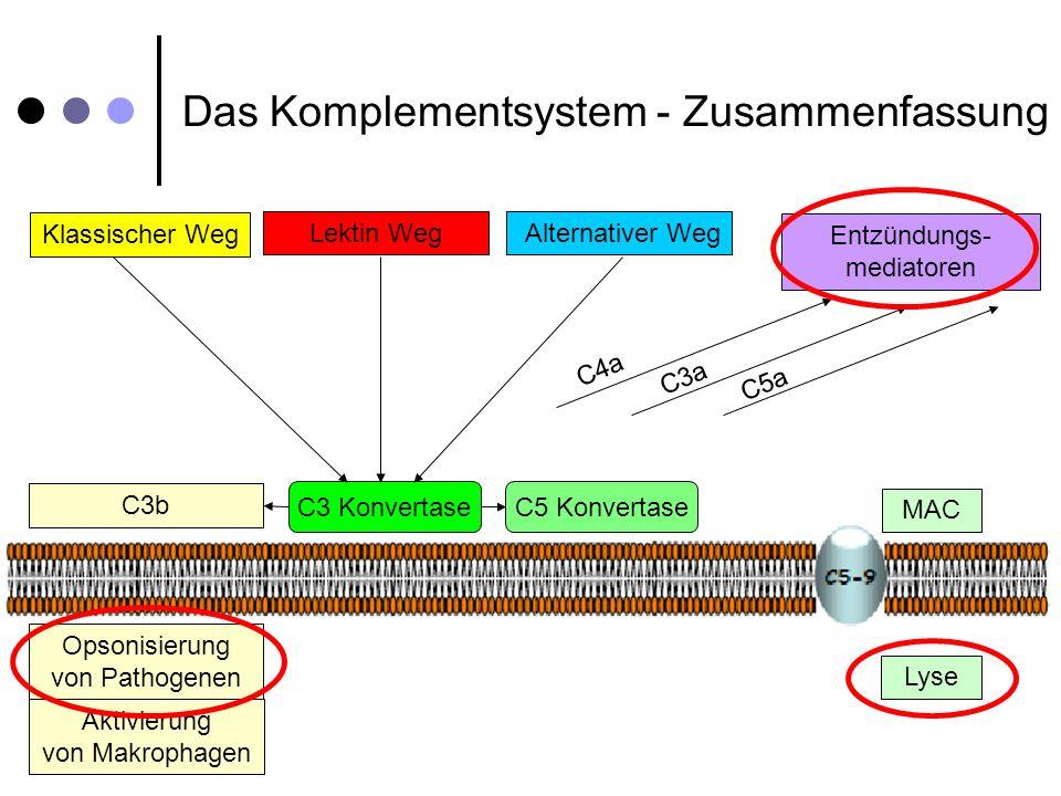 Das Komplementsystem - Zusammenfassung Klassischer Weg Alternativer Weg C3b Opsonisierung von Pathogenen Aktivierung von Makrophagen Lektin Weg Entzün