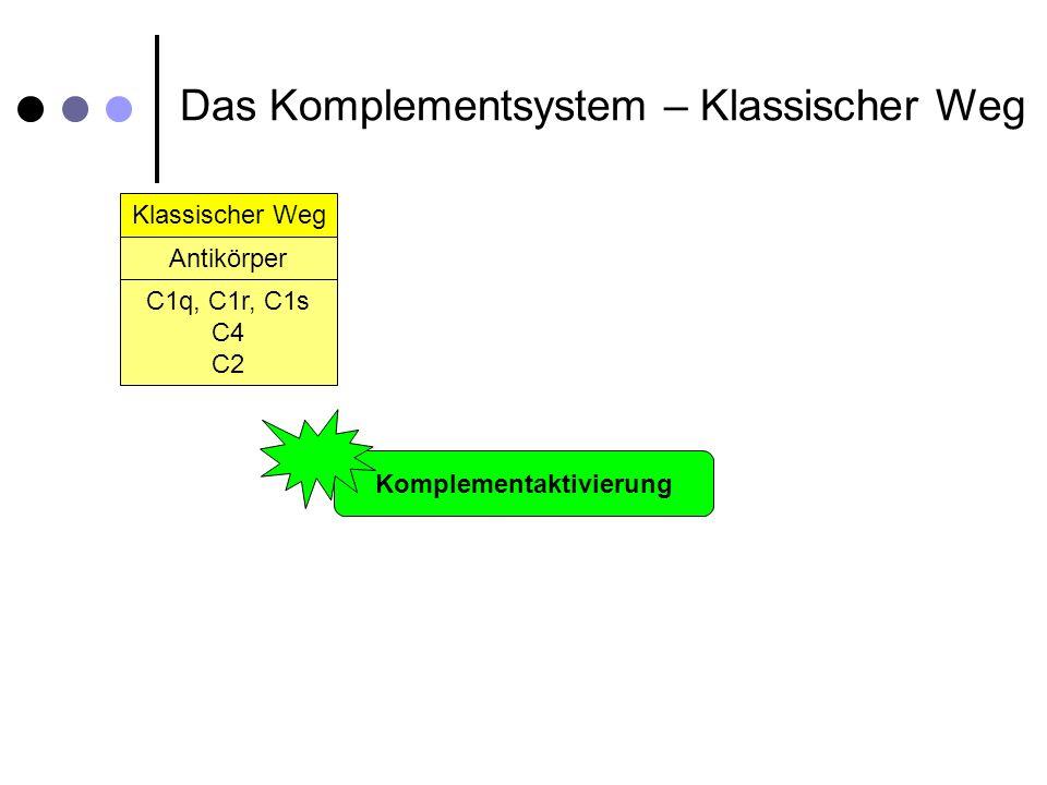 Klassischer Weg Alternativer Weg Spontane Hydrolyse Antikörper C1q, C1r, C1s C4 C2 Lektin Weg Mannose-Binding-Lectin (MBL) MBL, MASP-1, MASP-2 C4 C2 C3 B D Komplementaktivierung Aktivierung Wirkung Das Komplementsystem – Im Detail C3b Opsonisierung von Pathogenen Aktivierung von Makrophagen Opsonierung 1.Faktor C3b als Opsonisierungsfaktor 2.Markierung der Oberfläche von Fremdzellen 3.Bindung an den CR1-Rezeptor auf: oPhagozyten oMonozyten oMakrophagen oNeutrophilen Granulozyten 4.Einleitung der Phagozytose