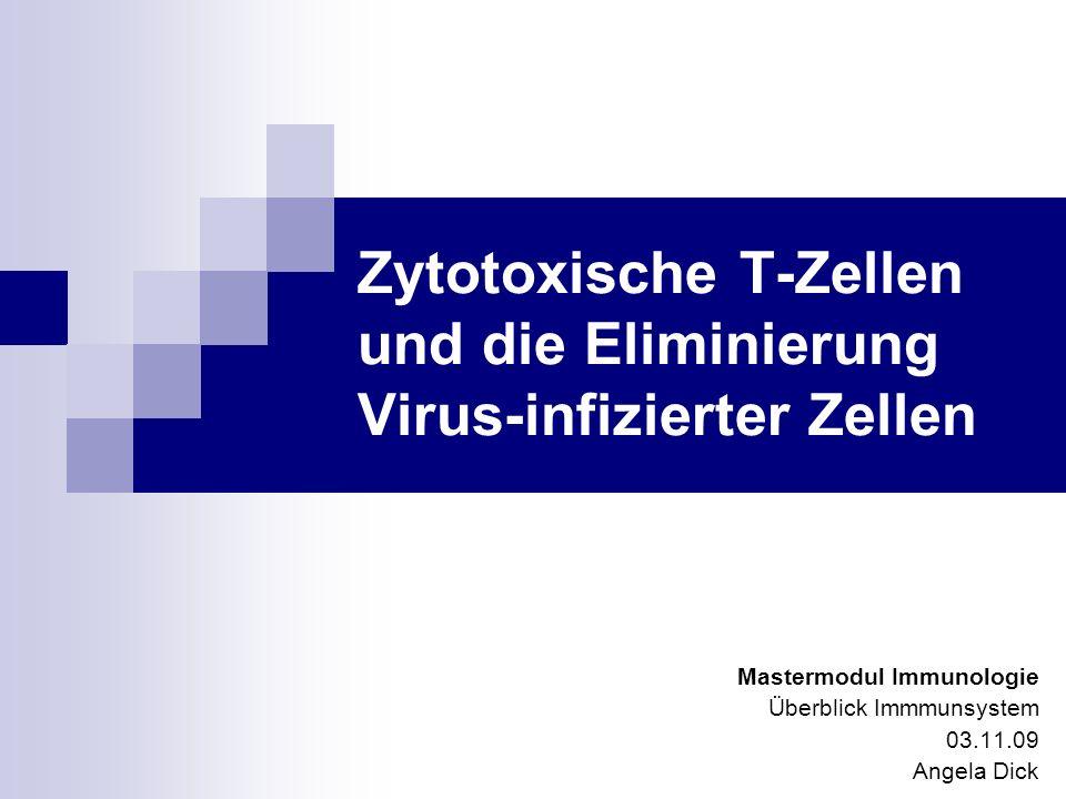 Zytotoxische T-Zellen und die Eliminierung Virus-infizierter Zellen Mastermodul Immunologie Überblick Immmunsystem 03.11.09 Angela Dick