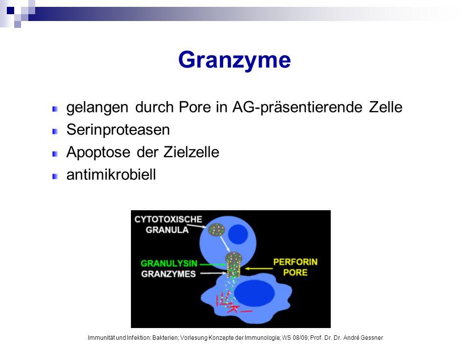 Granzyme gelangen durch Pore in AG-präsentierende Zelle Serinproteasen Apoptose der Zielzelle antimikrobiell Immunität und Infektion: Bakterien; Vorle