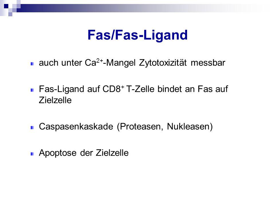 Fas/Fas-Ligand auch unter Ca 2+ -Mangel Zytotoxizität messbar Fas-Ligand auf CD8 + T-Zelle bindet an Fas auf Zielzelle Caspasenkaskade (Proteasen, Nuk