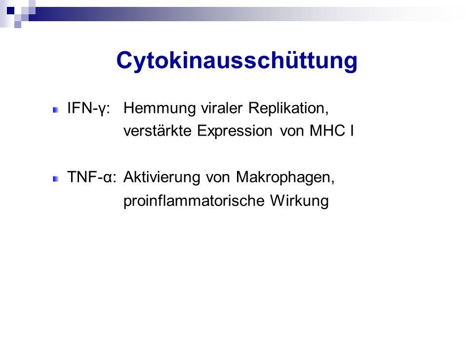 Cytokinausschüttung IFN-γ:Hemmung viraler Replikation, verstärkte Expression von MHC I TNF-α:Aktivierung von Makrophagen, proinflammatorische Wirkung