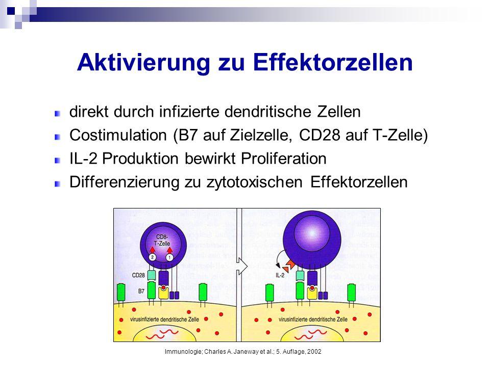 Aktivierung zu Effektorzellen direkt durch infizierte dendritische Zellen Costimulation (B7 auf Zielzelle, CD28 auf T-Zelle) IL-2 Produktion bewirkt P