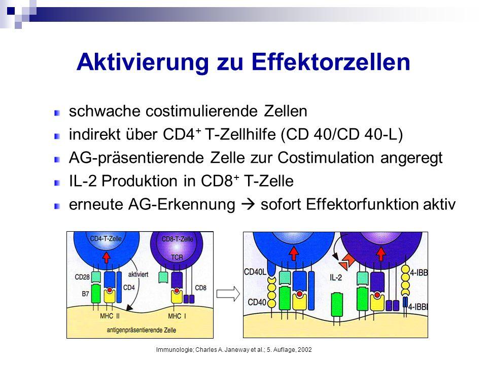 Aktivierung zu Effektorzellen schwache costimulierende Zellen indirekt über CD4 + T-Zellhilfe (CD 40/CD 40-L) AG-präsentierende Zelle zur Costimulatio