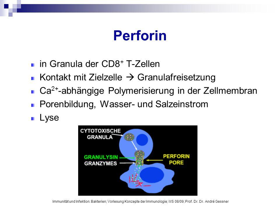 Perforin in Granula der CD8 + T-Zellen Kontakt mit Zielzelle Granulafreisetzung Ca 2+ -abhängige Polymerisierung in der Zellmembran Porenbildung, Wass