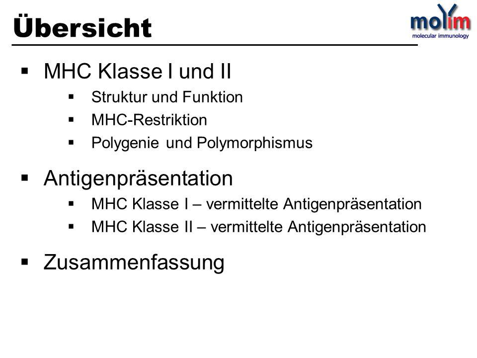 Übersicht MHC Klasse I und II Struktur und Funktion MHC-Restriktion Polygenie und Polymorphismus Antigenpräsentation MHC Klasse I – vermittelte Antige