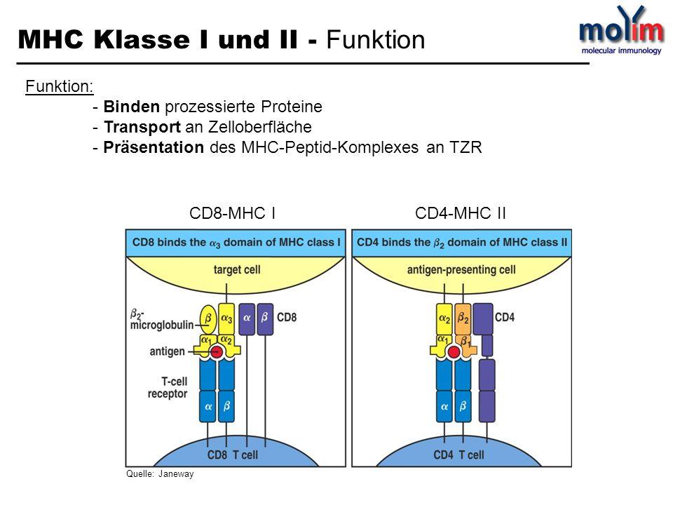 MHC Klasse I und II – MHC - Restriktion T-Zellerkennung von Antigenen ist MHC-abhängig TZR erkennt spezifisch nur ein MHC-Allel mit einem bestimmten Peptid Ausnahme: Alloreaktivität: Nicht-Selbst MHC Moleküle werden von 1-10% der T Zellen erkannt Quelle: Immunologie; Charles A.