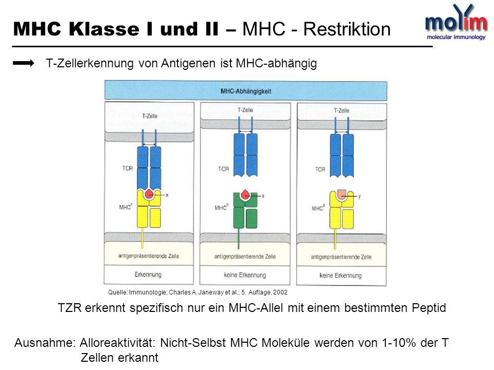 MHC Klasse I und II – MHC - Restriktion T-Zellerkennung von Antigenen ist MHC-abhängig TZR erkennt spezifisch nur ein MHC-Allel mit einem bestimmten P