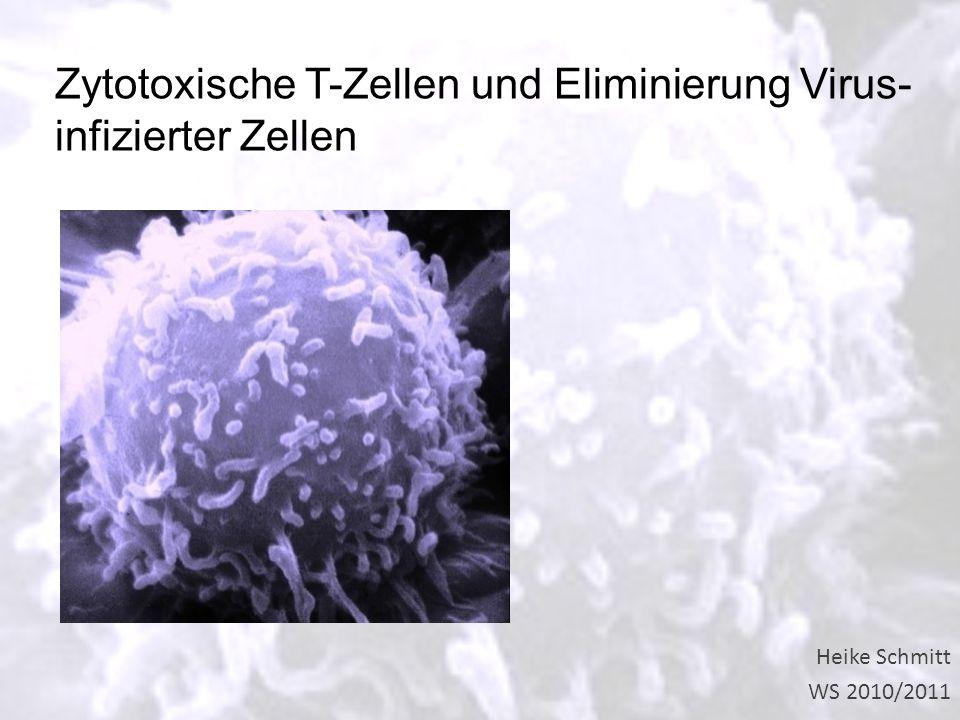 Heike Schmitt WS 2010/2011 Zytotoxische T-Zellen und Eliminierung Virus- infizierter Zellen