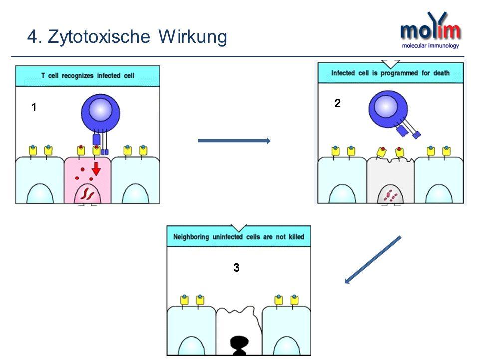 4. Zytotoxische Wirkung 12 3 2