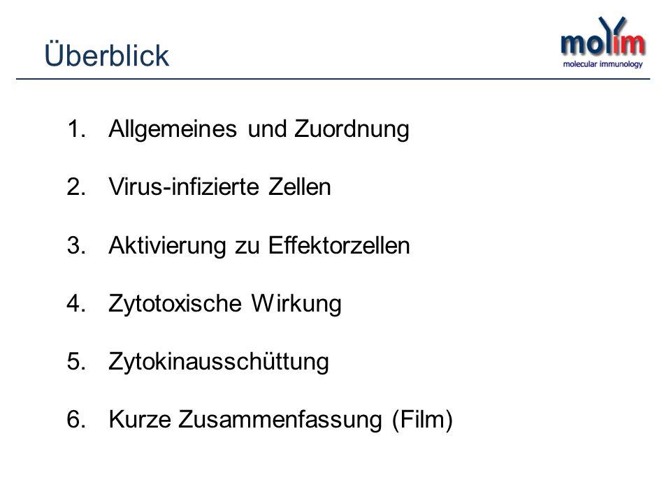 Überblick 1.Allgemeines und Zuordnung 2.Virus-infizierte Zellen 3.Aktivierung zu Effektorzellen 4.Zytotoxische Wirkung 5.Zytokinausschüttung 6.Kurze Z