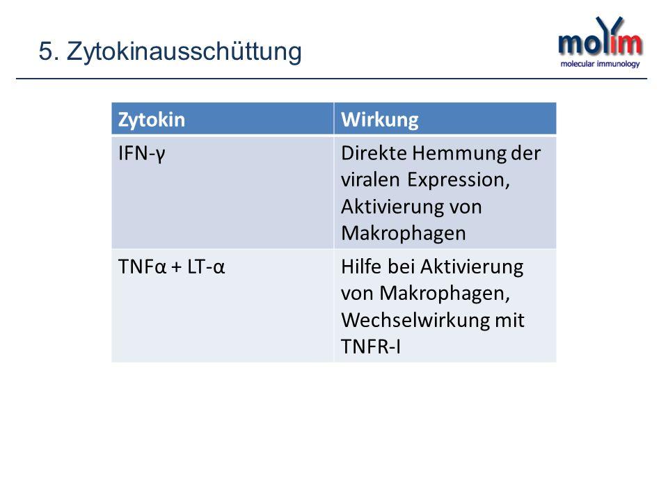 5. Zytokinausschüttung ZytokinWirkung IFN-γDirekte Hemmung der viralen Expression, Aktivierung von Makrophagen TNFα + LT-αHilfe bei Aktivierung von Ma