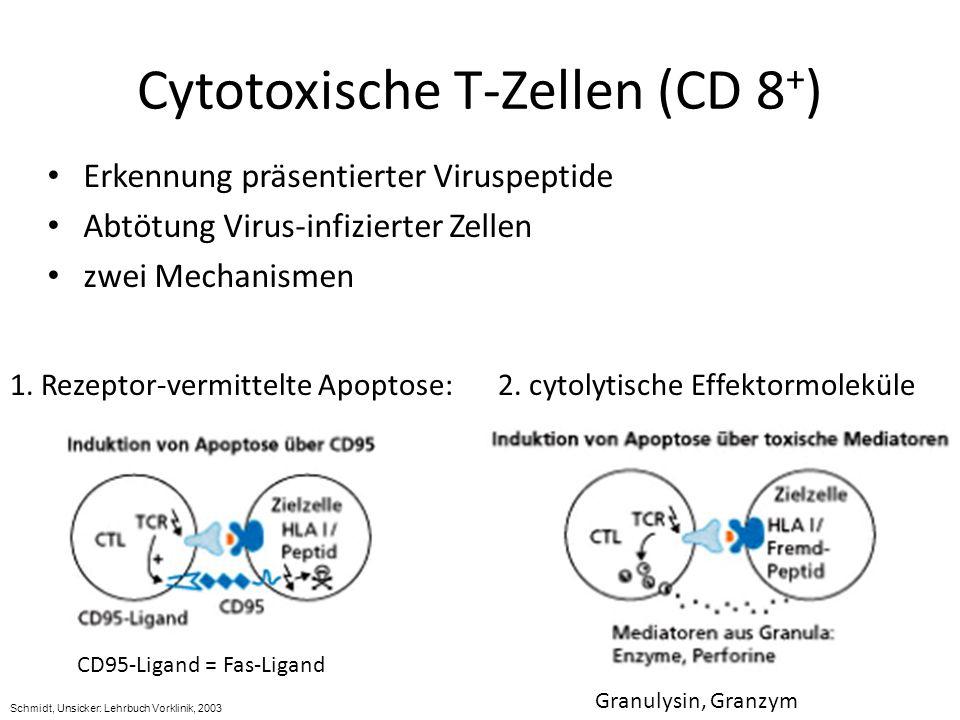 Cytotoxische T-Zellen (CD 8 + ) Erkennung präsentierter Viruspeptide Abtötung Virus-infizierter Zellen zwei Mechanismen 2. cytolytische Effektormolekü