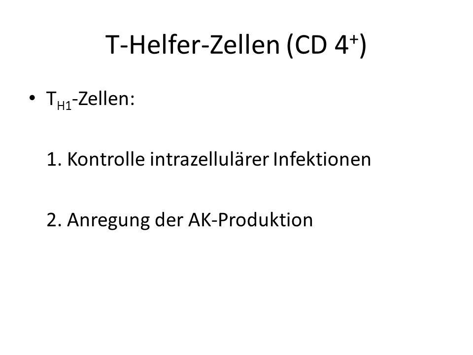 T-Helfer-Zellen (CD 4 + ) T H1 -Zellen: 1. Kontrolle intrazellulärer Infektionen 2. Anregung der AK-Produktion