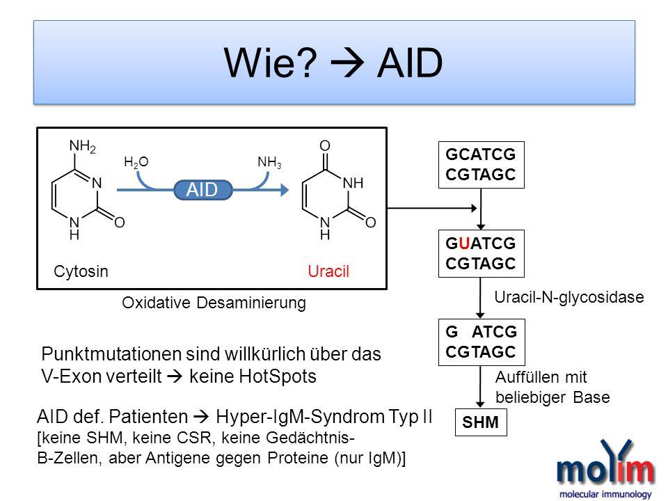 Wie? AID GCATCG CGTAGC GUATCG CGTAGC G ATCG CGTAGC AID H2OH2ONH 3 Cytosin Uracil Uracil-N-glycosidase SHM Oxidative Desaminierung Punktmutationen sind