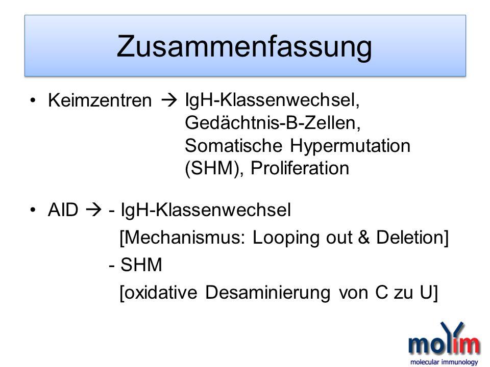 Zusammenfassung Keimzentren AID - IgH-Klassenwechsel [Mechanismus: Looping out & Deletion] - SHM [oxidative Desaminierung von C zu U] IgH-Klassenwechs