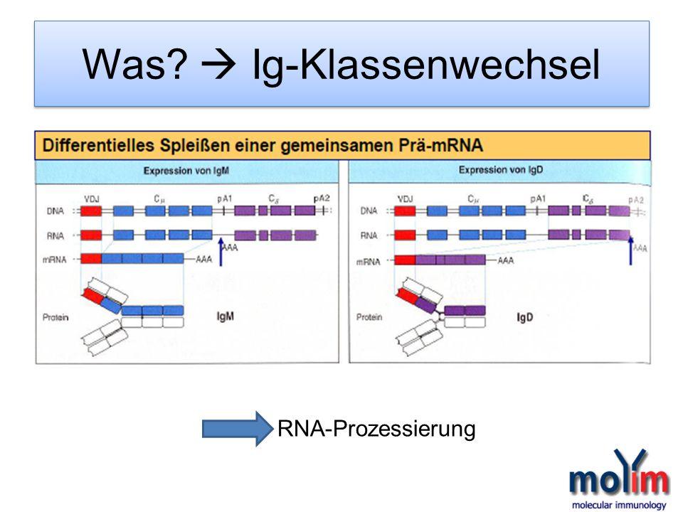 RNA-Prozessierung