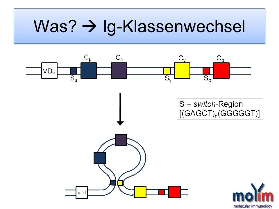 Was? Ig-Klassenwechsel VDJ CµCµ CδCδ CγCγ CαCα SµSµ SγSγ SαSα S = switch-Region [(GAGCT) n (GGGGGT)]