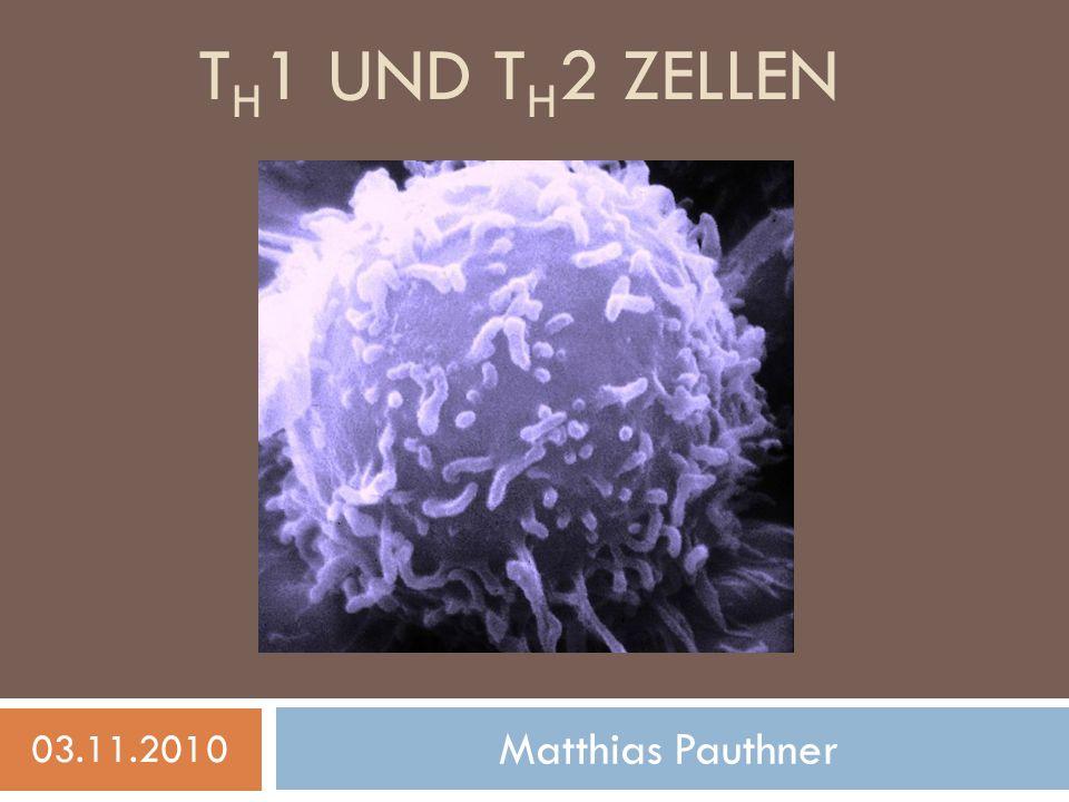T H 1 UND T H 2 ZELLEN Matthias Pauthner 03.11.2010