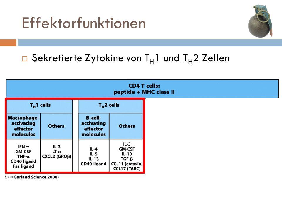 Sekretierte Zytokine von T H 1 und T H 2 Zellen