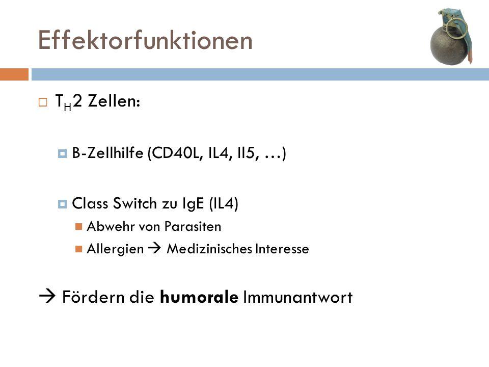 Effektorfunktionen T H 2 Zellen: B-Zellhilfe (CD40L, IL4, Il5, …) Class Switch zu IgE (IL4) Abwehr von Parasiten Allergien Medizinisches Interesse För
