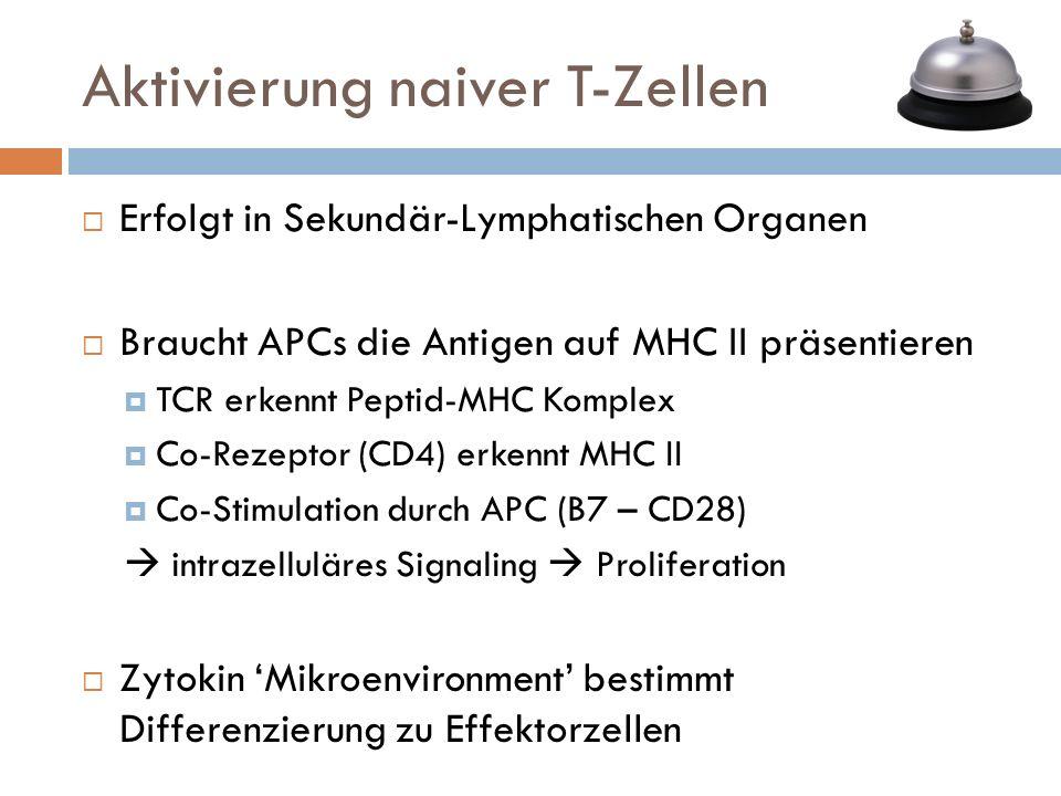 Aktivierung naiver T-Zellen Erfolgt in Sekundär-Lymphatischen Organen Braucht APCs die Antigen auf MHC II präsentieren TCR erkennt Peptid-MHC Komplex