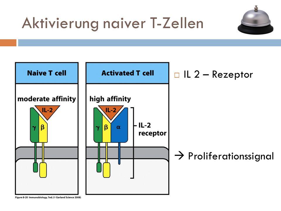 IL 2 – Rezeptor Proliferationssignal