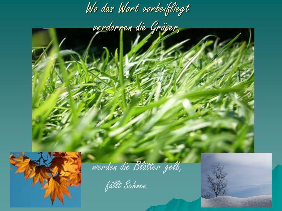 Wo das Wort vorbeifliegt verdorren die Gräser, werden die Blätter gelb, fällt Schnee.