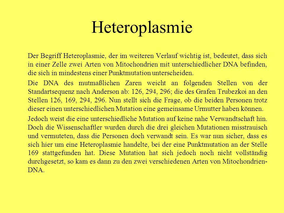 Heteroplasmie Der Begriff Heteroplasmie, der im weiteren Verlauf wichtig ist, bedeutet, dass sich in einer Zelle zwei Arten von Mitochondrien mit unterschiedlicher DNA befinden, die sich in mindestens einer Punktmutation unterscheiden.