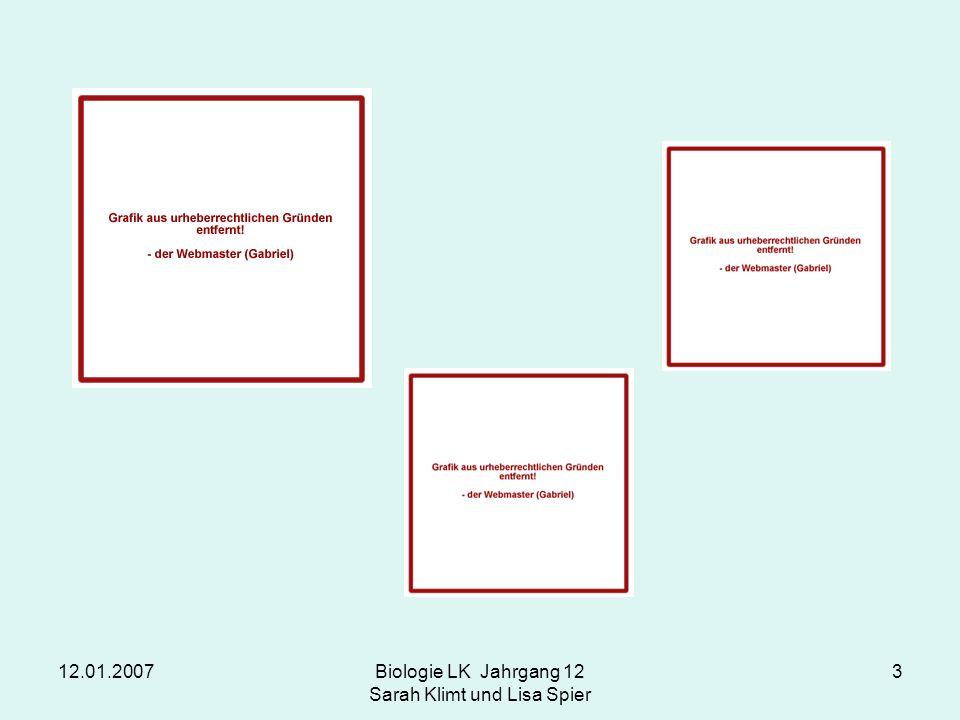 12.01.2007Biologie LK Jahrgang 12 Sarah Klimt und Lisa Spier 3