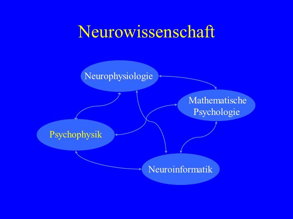 Neurowissenschaft Mathematische Psychologie Neuroinformatik Neurophysiologie Psychophysik