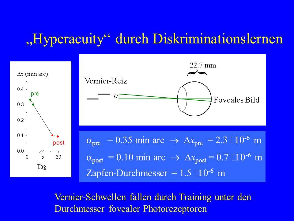 Hyperacuity durch Diskriminationslernen Vernier-Schwellen fallen durch Training unter den Durchmesser fovealer Photorezeptoren } 22.7 mm Foveales Bild