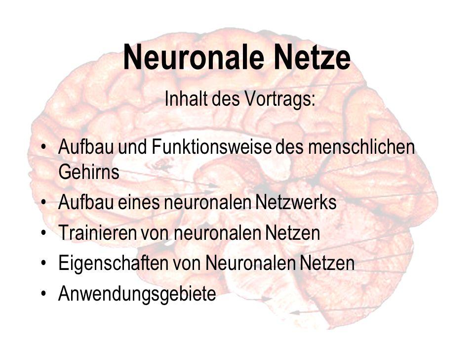 Neuronale Netze Inhalt des Vortrags: Aufbau und Funktionsweise des menschlichen Gehirns Aufbau eines neuronalen Netzwerks Trainieren von neuronalen Netzen Eigenschaften von Neuronalen Netzen Anwendungsgebiete