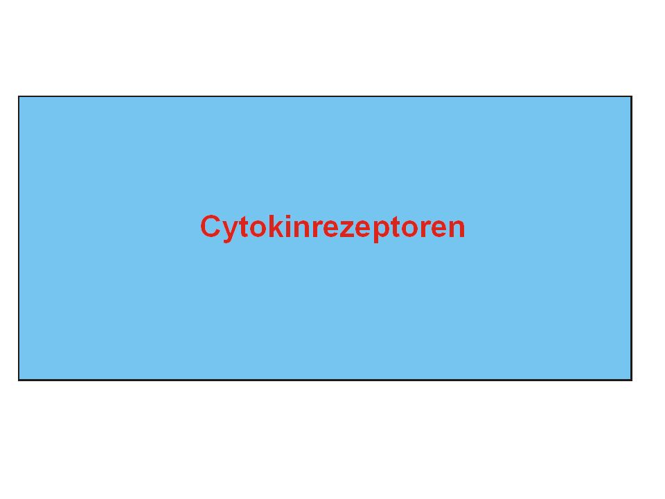 Cytokine - Eigenschaften - - Polypeptide mit geringer molekularer Masse ( <200 As) - biologische Wirkung im nano- picomolaren Konzentrationen - werden nicht gespeichert sondern nach Stimulation synthe- tisiert und sezerniert - entfalten ihre Wirkung an einer grossen Zahl unterschiedlicher Zelltypen (pleiotrope Signalmolküle) - zentrale Regulatoren der Immunantwort - wirken (auto-, para-, oder endokrin) über die Bindung an spezifische Rezeptoren auf der Zielzelle - Wirkung oft an direkte Zell-Zell Kontakte gebunden