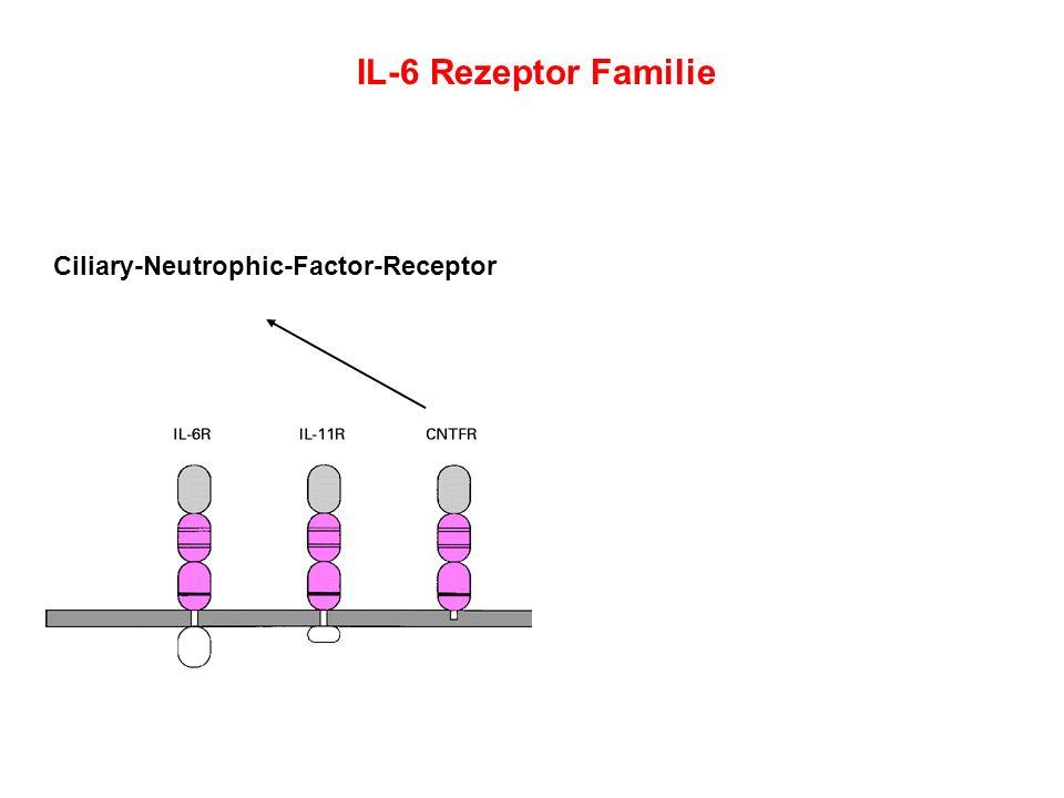 Ciliary-Neutrophic-Factor-Receptor
