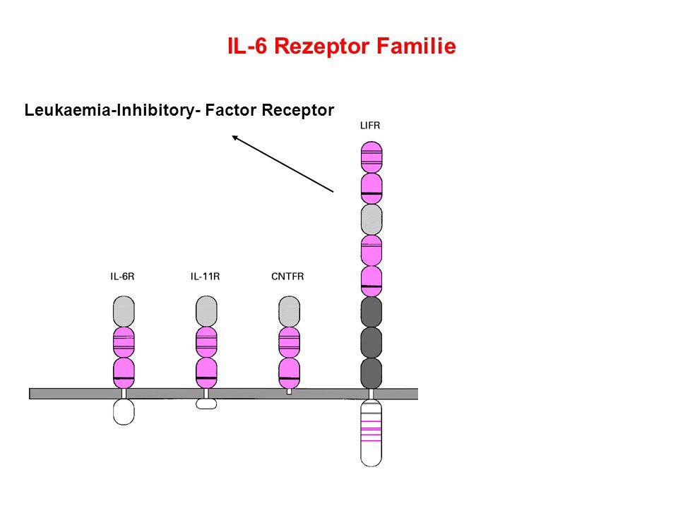 IL-6 Rezeptor Familie Leukaemia-Inhibitory- Factor Receptor