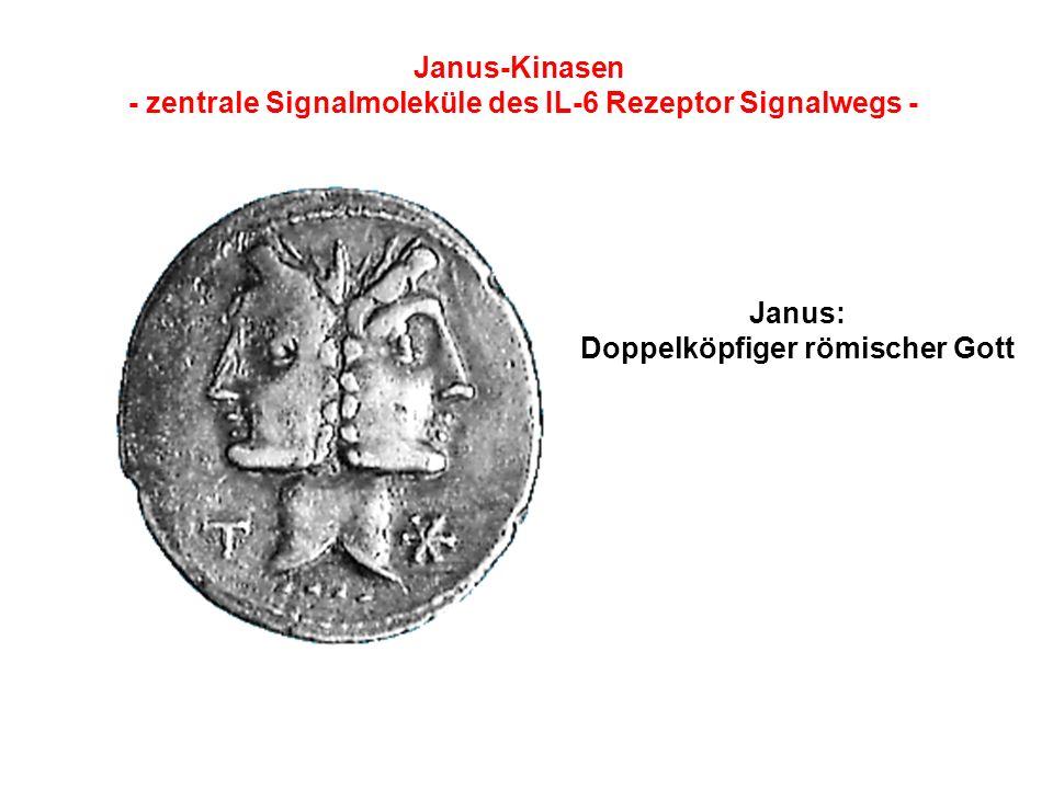 Janus-Kinasen - zentrale Signalmoleküle des IL-6 Rezeptor Signalwegs - Janus: Doppelköpfiger römischer Gott