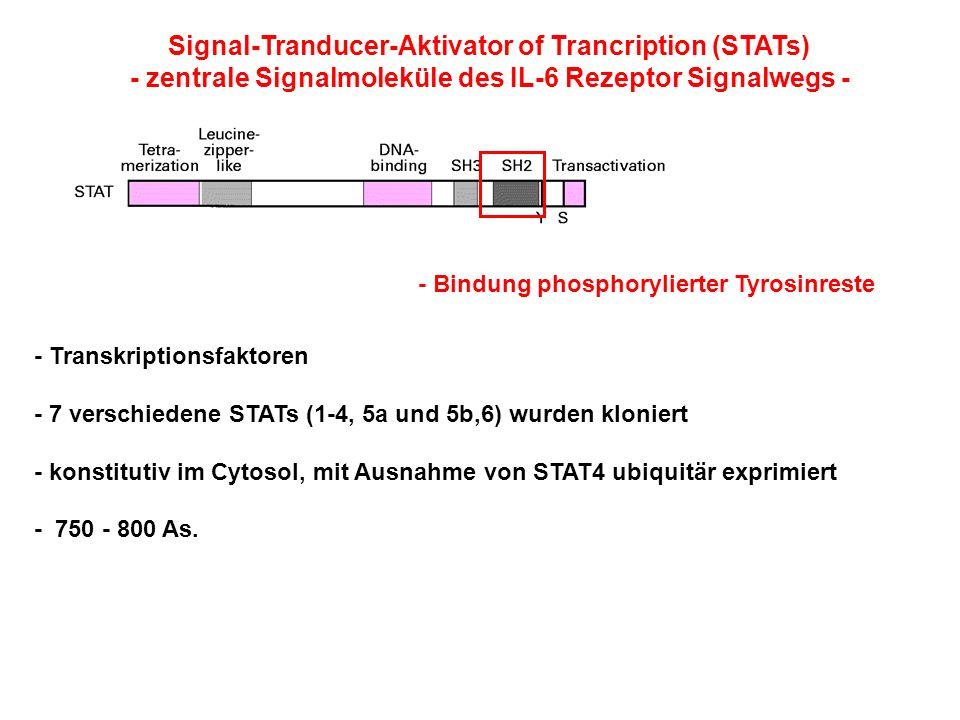 Signal-Tranducer-Aktivator of Trancription (STATs) - zentrale Signalmoleküle des IL-6 Rezeptor Signalwegs - - Transkriptionsfaktoren - 7 verschiedene