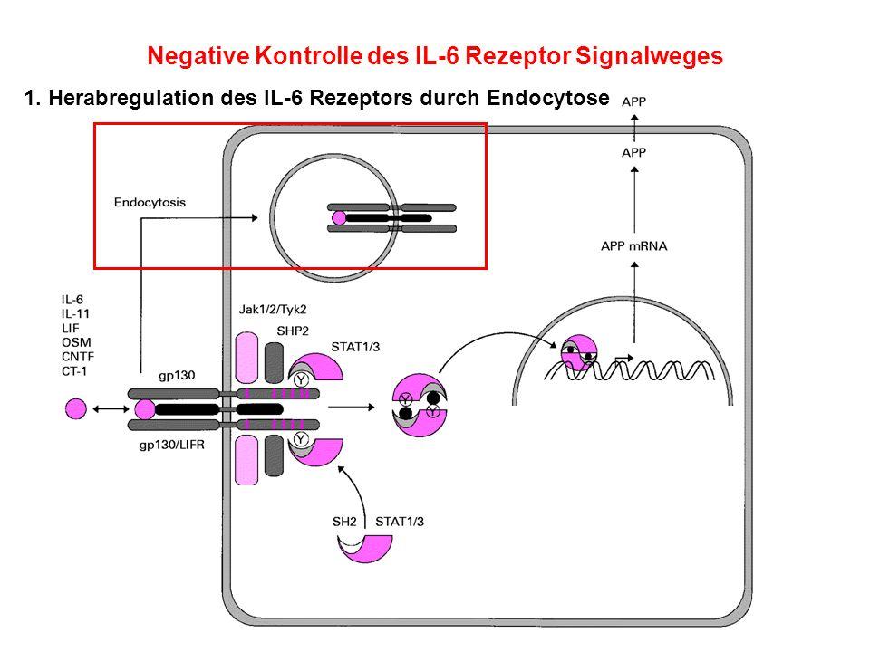 Negative Kontrolle des IL-6 Rezeptor Signalweges 1. Herabregulation des IL-6 Rezeptors durch Endocytose