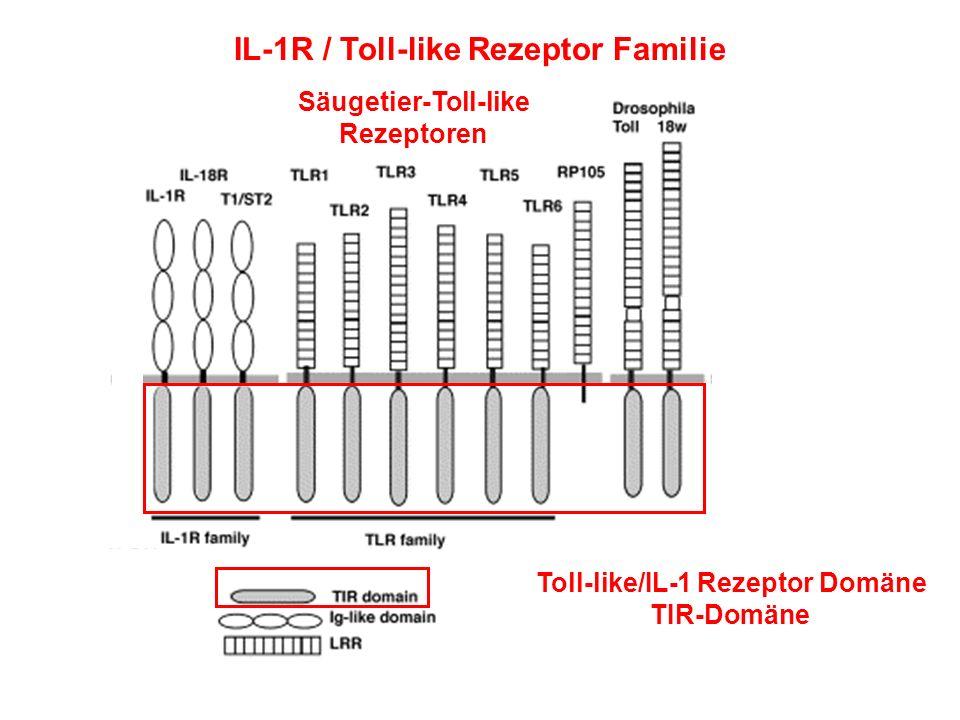 IL-1R / Toll-like Rezeptor Familie Toll-like/IL-1 Rezeptor Domäne TIR-Domäne Säugetier-Toll-like Rezeptoren