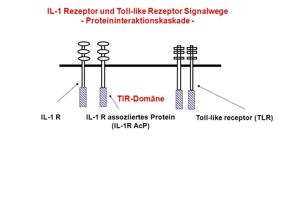 IL-1 Rezeptor und Toll-like Rezeptor Signalwege - Proteininteraktionskaskade - TIR-Domäne IL-1 RIL-1 R assoziiertes Protein (IL-1R AcP) Toll-like rece