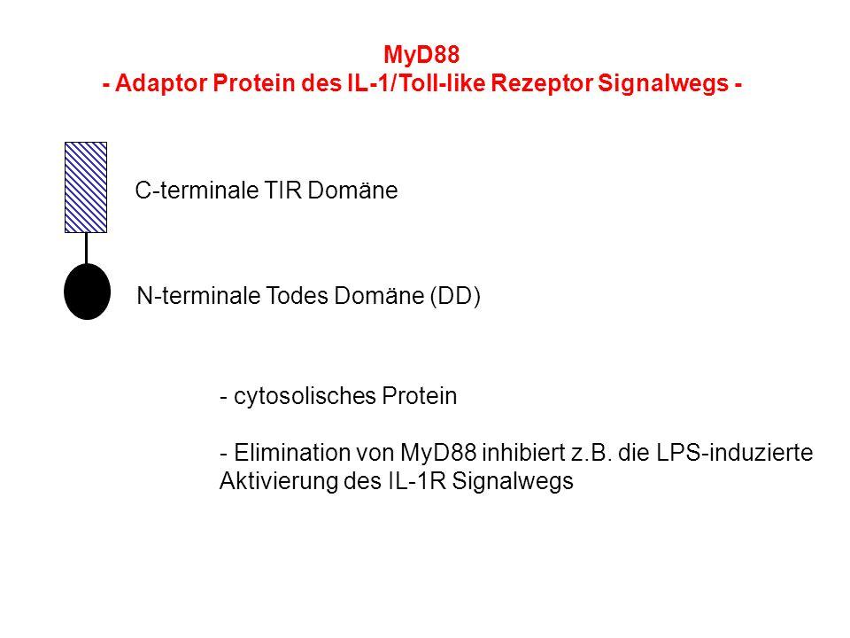 - Adaptor Protein des IL-1/Toll-like Rezeptor Signalwegs - C-terminale TIR Domäne N-terminale Todes Domäne (DD) - cytosolisches Protein - Elimination