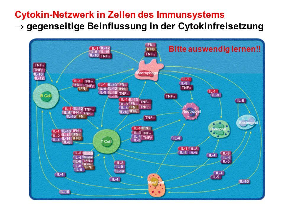 Cytokine - Bildung - Zellen des Immunsystems: - B-Zellen - T-Zellen - Monocyten/Makrophagen - Neutrophile Zellen - Natural Killer Cells (NK) - Mastzellen - Eosinophile Andere Zelltypen - Fibroblasten (IL-6, IL-11) - Hepatocyten (IL-6) - Epithelzellen (IL-1 ) - Neuronale Zellen (IL-1 ) - Keratinocyten (IL-6, IL-1 )