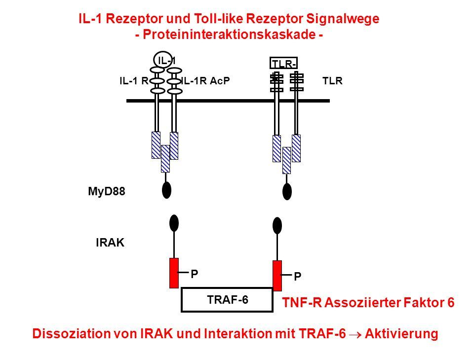 IL-1 Rezeptor und Toll-like Rezeptor Signalwege - Proteininteraktionskaskade - IL-1 TLR- L IL-1 RIL-1R AcPTLR P P TRAF-6 Dissoziation von IRAK und Int